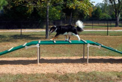 dog on incline