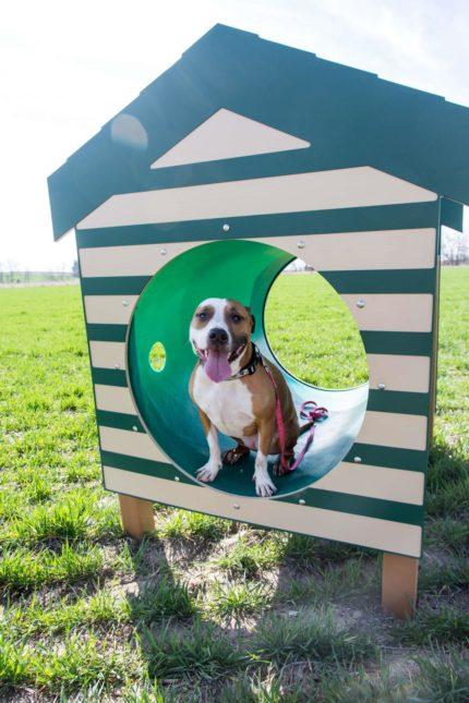 dog-in-home-tube