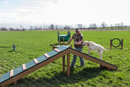 dog-running-up-incline