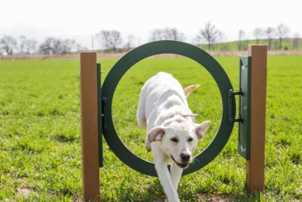 dog-running-through-hoop