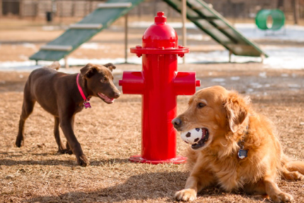 dogs with fire hydrant